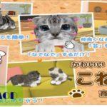 [ねこ育成ゲーム – 完全無料!子猫をのんびり育てるアプリ!かわいいねこゲーム!] チートのやり方解説